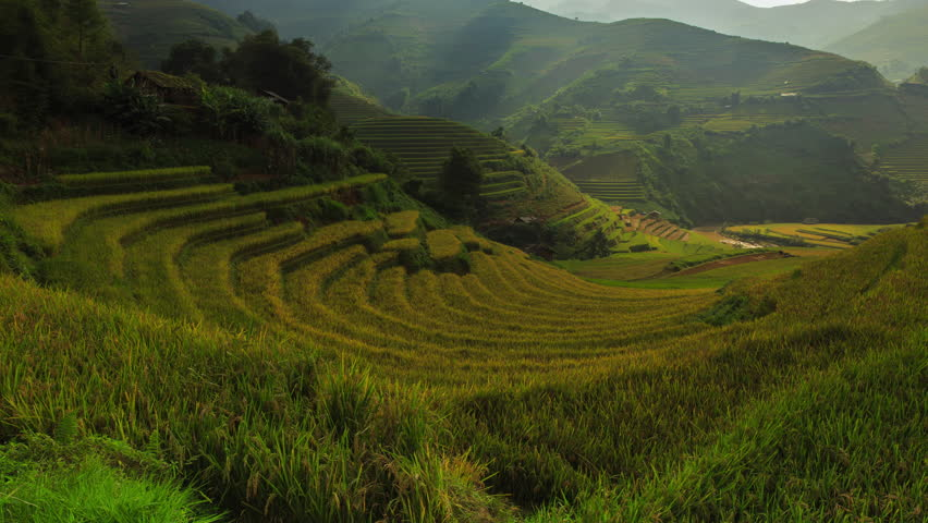 Rice fields on terraced of Mu Cang Chai, YenBai, Vietnam. Rice fields prepare the harvest at Northwest Vietnam.Vietnam landscapes. | Shutterstock HD Video #20298469