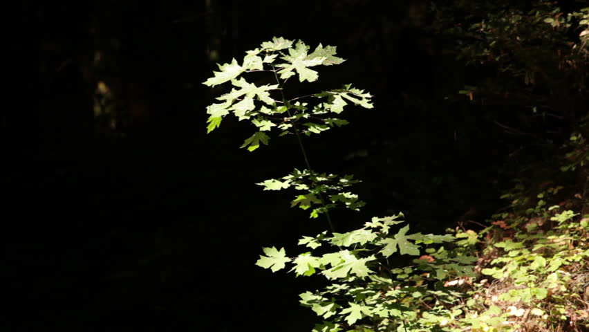 Brightly Lit Sapling Against Shadow