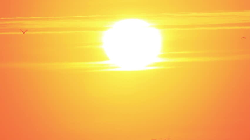 Flock of birds flies against bright sun on the sky | Shutterstock HD Video #20384749