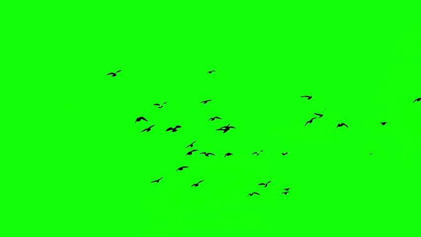 Birds on the green screen | Shutterstock HD Video #20422699