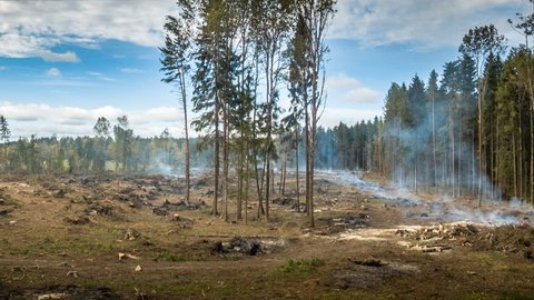 Deforestation and the destruction of forests by burning trees