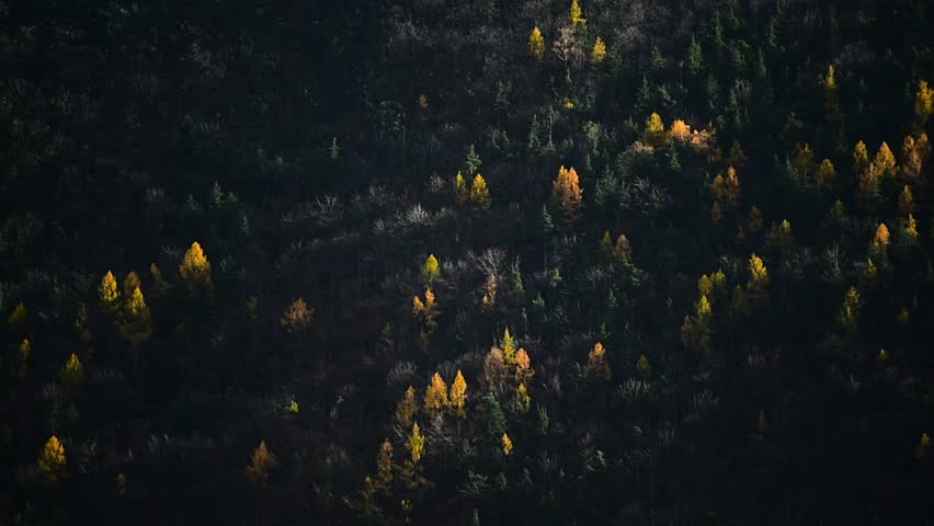 Contrast between larch trees and pine trees in autumn season | Shutterstock HD Video #21233869
