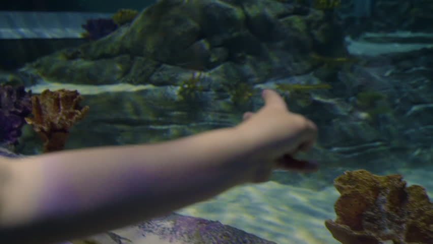 Curious Little Girl Walks Next To Aquarium Tank, She Holds Her Hand Against The Glass