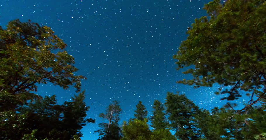 Night Sky Above the Treetops. Pointed towards the North Star and Rendered with a Star Trail Effect.