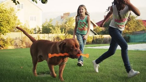 A dog is running with a bone in its mouth together with little European girls cross the yard. Outdoors activities. Family time. Friends forever. Children portrait.
