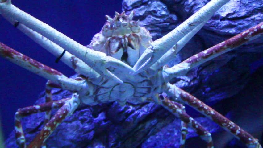 crab 2 #2149679