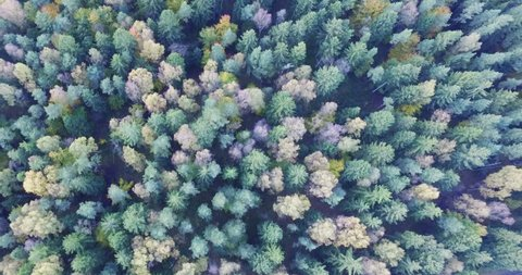 Diversity - drone flying over amazingly colored fall forest