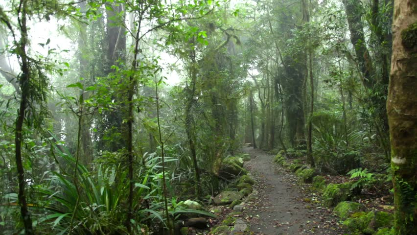 Mysterious path in foggy tropical rain forest, Queensland, Australia. Locked down. HD