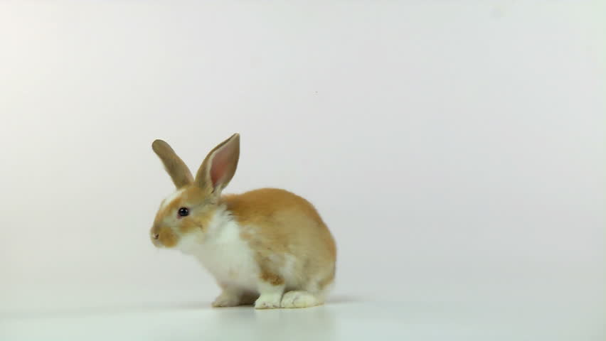 Bunny on a white background hopping around