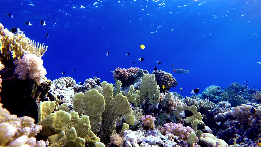 Coral reef, tropical fish. Warm ocean and clear water. Underwater world. Diving and Snorkelling.