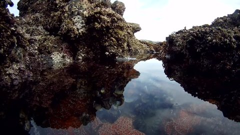 underwater scene of tide pool showing starfish, sea urchins and other marine life
