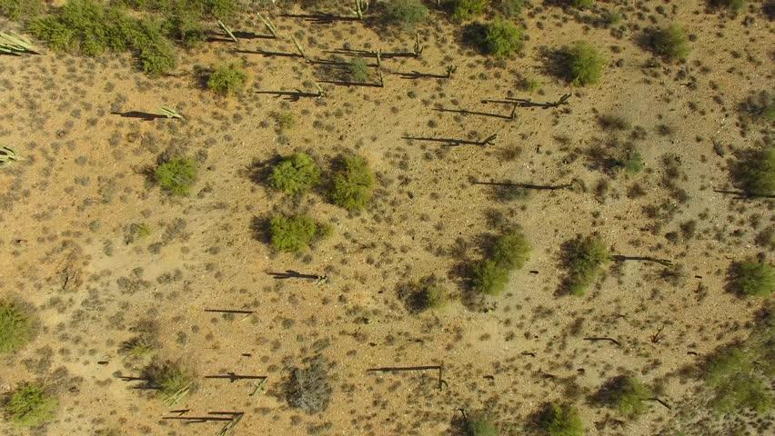 Flight over desert field of saguaros looking straight down
