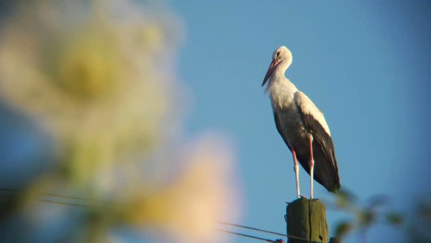 Stork flies with pillar