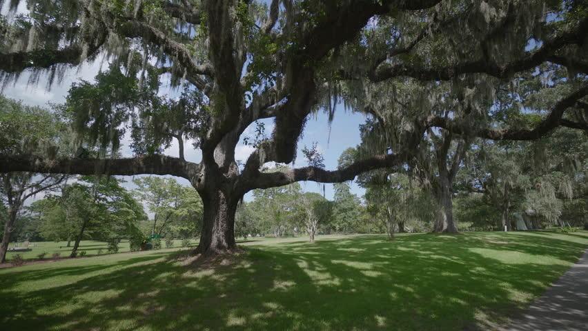 The Giant Oaks Of Brookgreen Gardens, Myrtle Beach , South Carolina, USA,  Jul 2016 Stock Footage Video 22188799 | Shutterstock