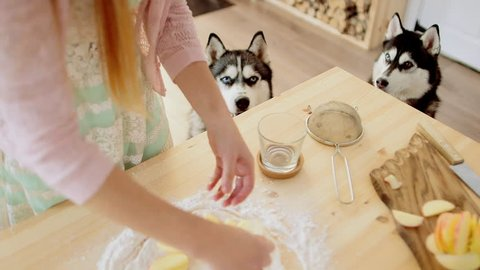 Woman makes fresh apple pie in her kitchen. Hands puts apples on the dough. Pie of thin dough. Huskies looks at that