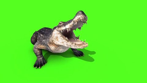 Alligator Crocodile Reptile Attacks Front Loop Green Screen