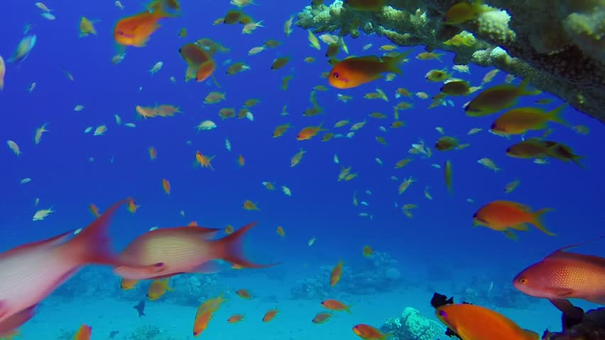 Underwater World. Cute Cartoon Colorful Different Fish ...