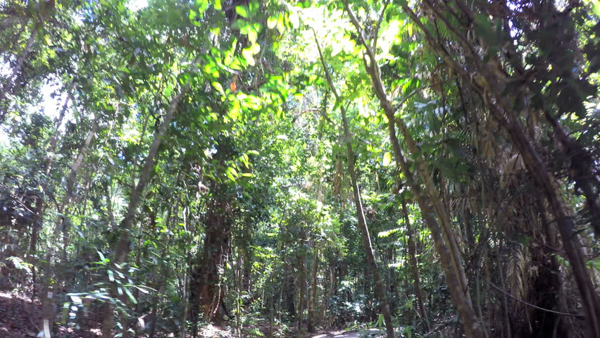 POV walking on tourist trail of Daintree Rainforest through woodland trees with sun flare in Queensland Australia