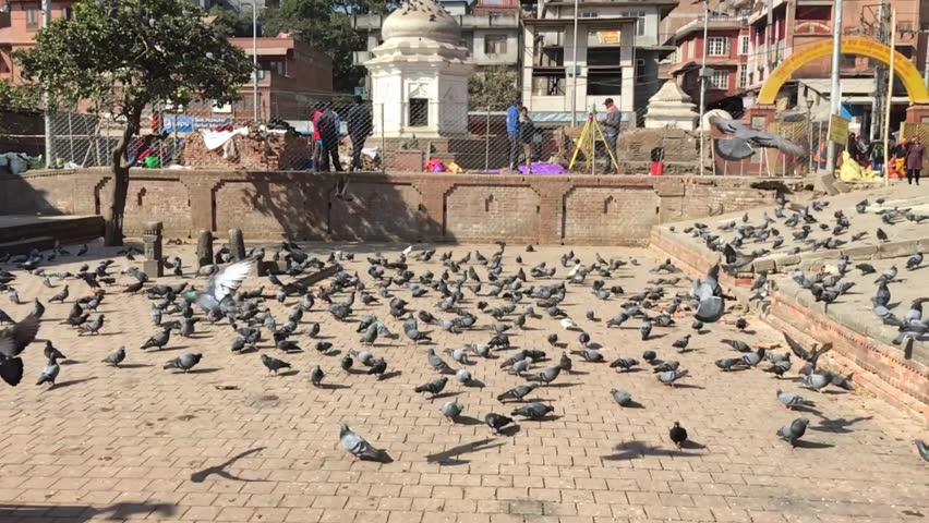 Pashupatinath, Nepal - Dec 15, 2016: Nepal. Slow Motion Video Pigeons Fly at Pashupatinath Temple, Kathmandu, Nepal