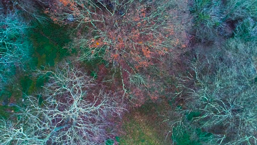 Aerial colorful forest view 60fps drone | Shutterstock HD Video #22782349