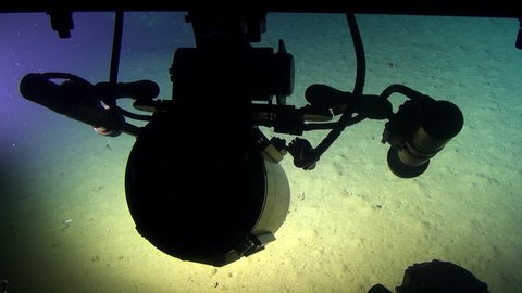 Deep Sea life, view from a researcher submarine in 300 m depth - Pacific Ocean, Cocos Island, Costa Rica.