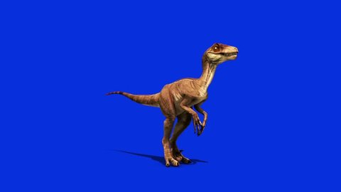 Dinosaurs Velociraptor Looks Around Down Jurassic World Prehistory Blue Screen