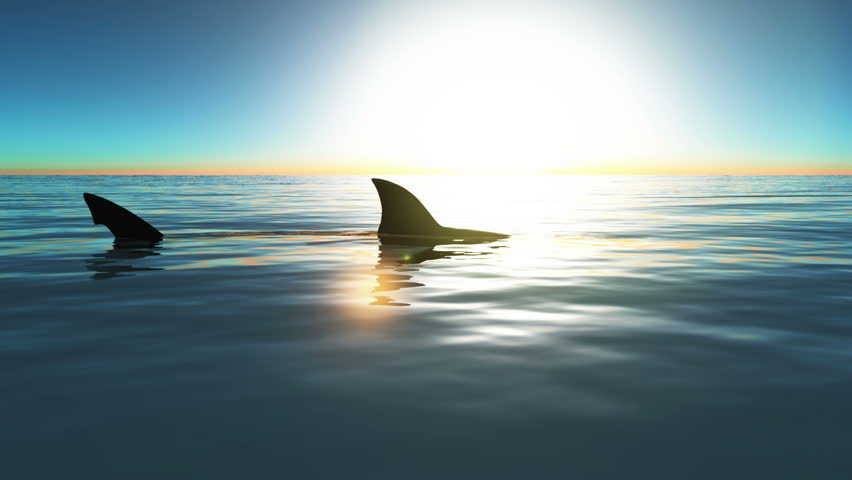 Header of shark