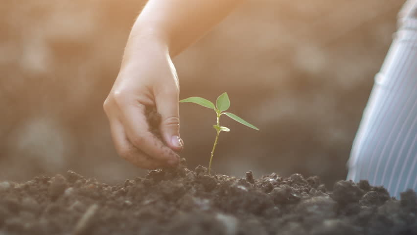 Young woman planting a tree in the garden. Ecology concept, Slow motion shot  | Shutterstock HD Video #22952809