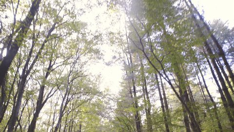 Tilt down while driving with car under tall forest trees towards light 4K. Wide shot with camera on gimbal stabilizer moving towards light in focus in middle of frame. Car bonnet driving over gravel.