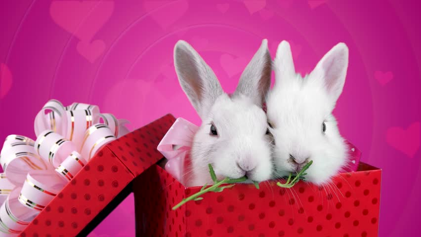 A Couple of White Rabbits with Pink Bows in Present Box, Eating Arugula