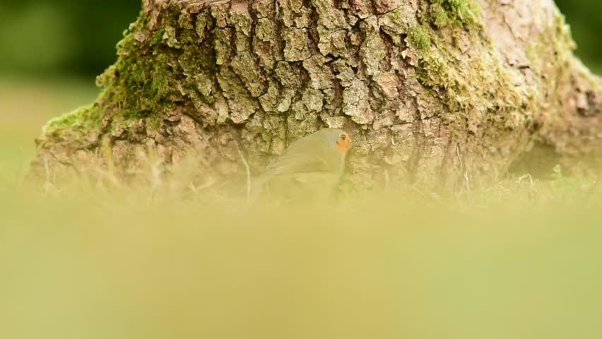 Wildlife video | Shutterstock HD Video #23172799