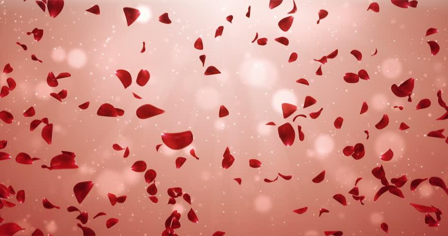 Romantic Flying Light Red Rose Flower Petals Backdrop. Ideal For ...
