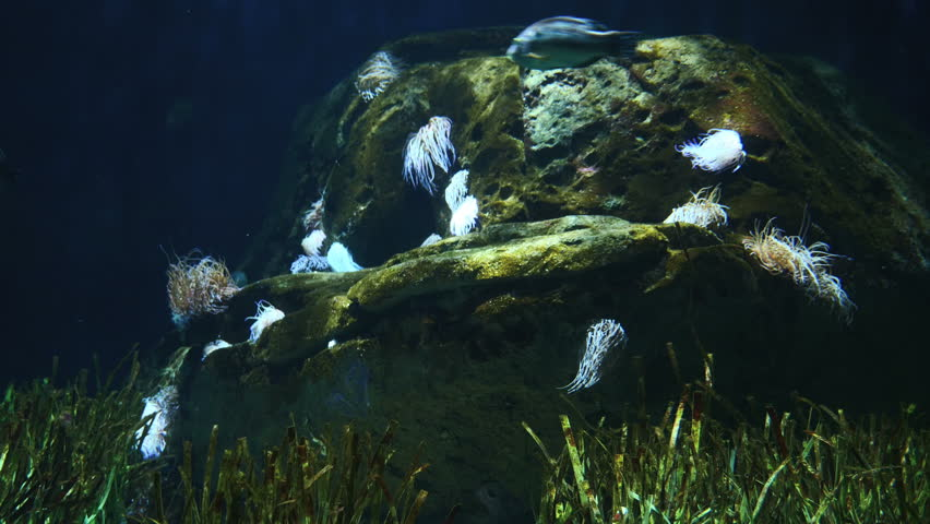 Aquarium Background Filmed In Valencia Stock Footage Video 100