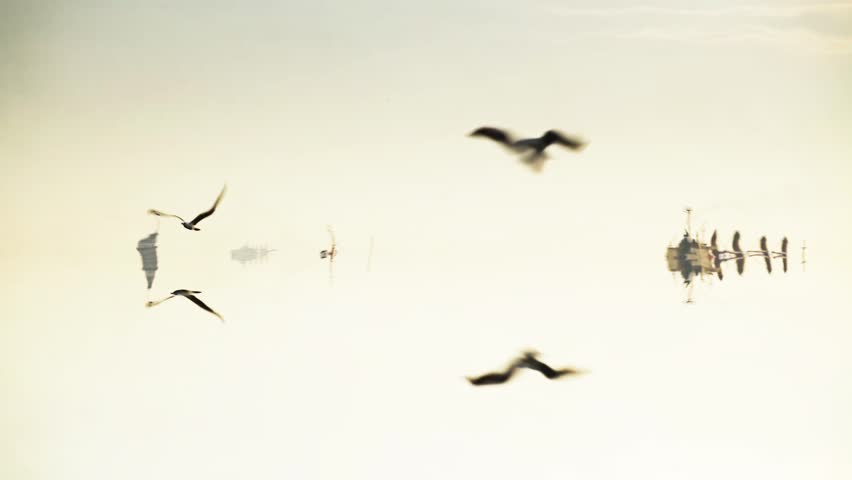 Liquid Effect, Loop able Seagull Flight, Istanbul Bosphorus | Shutterstock HD Video #23256760