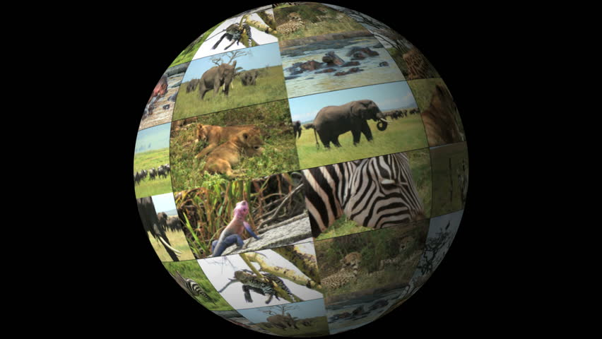 World of Wild Animals - rotating planet globe with montage of lions, elephants, hippos, leopard and more