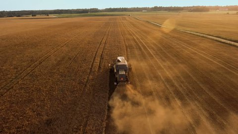 Top View of Working Agricultural Harvester on Wheat Field at Sunset Time. Follow Shot.