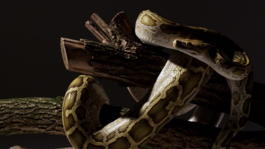 Amazing Snake Dolly Shot 4k