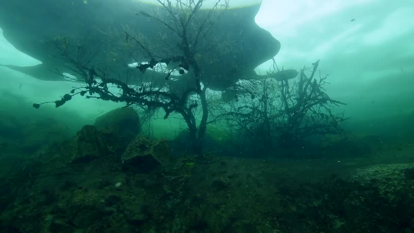Flooded tree under ice in frozen lake iceind - HD stock video clip & Light Rays Shining Through Mangrove Tree Branches Underwater In ... azcodes.com
