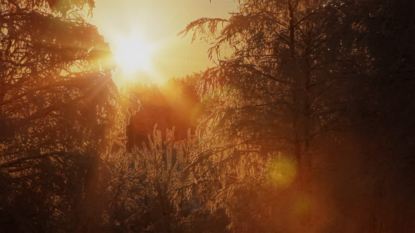 Sun shinning through the branches of frozen trees. Beautiful winter background.
