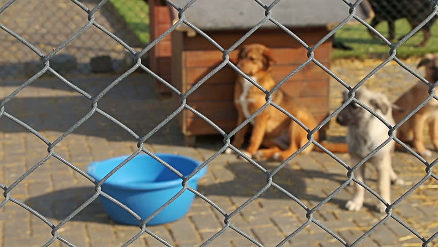 Sad puppies dogs in shelter behind fence waiting to be rescued and adopted to new home