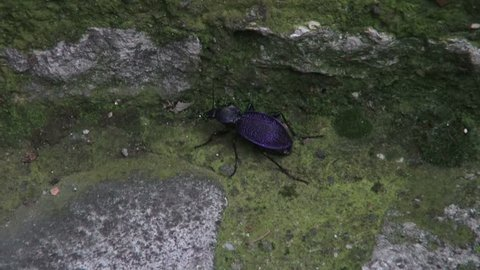 Insect in the area of the Black Sea coast, Turkey, Safranbolu, on May 31, 2014