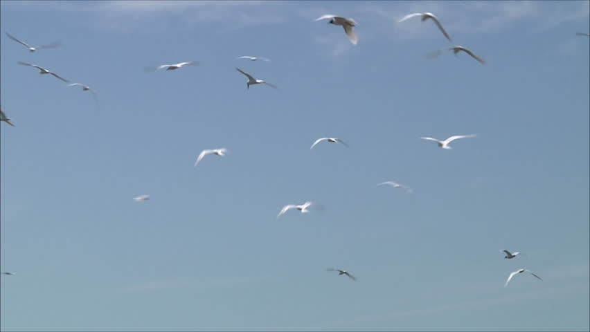 Flock of gulls against the blue sky | Shutterstock HD Video #2394749