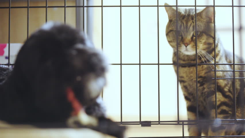 Cat look at dog chew snack on stick 4K. Long shot of cat outside iron cage in focus. Black dog inside the cage out of focus.