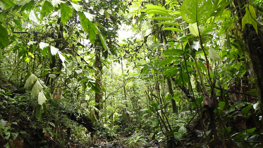 Rainforest stream in the Upper Amazon Ecuador at 940m elevation - HD stock footage clip & 4K View Through Leaves And Trees Of Rainforest Canopy In Tropical ...