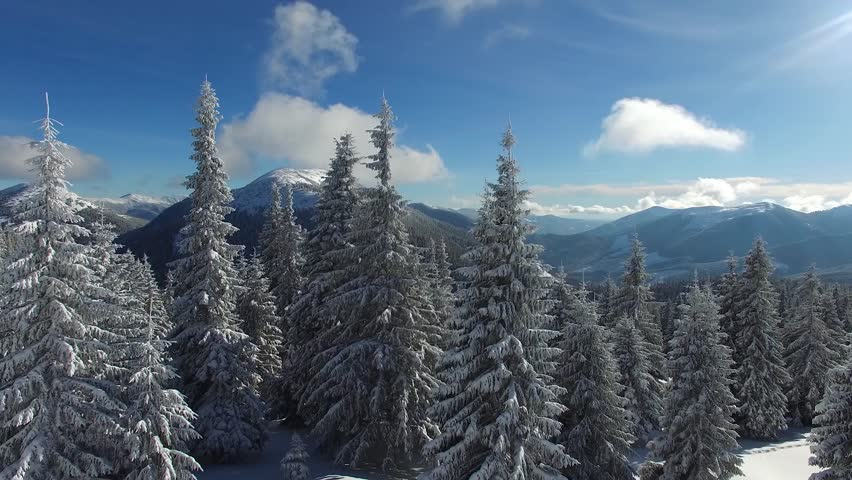 Aerial view of mountains at magical winter day - huge spruces and snow-covered hills stretching to the horizon.  | Shutterstock HD Video #24410999