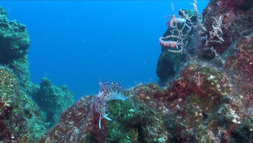 nudibranch  nudi branch  underwater close up