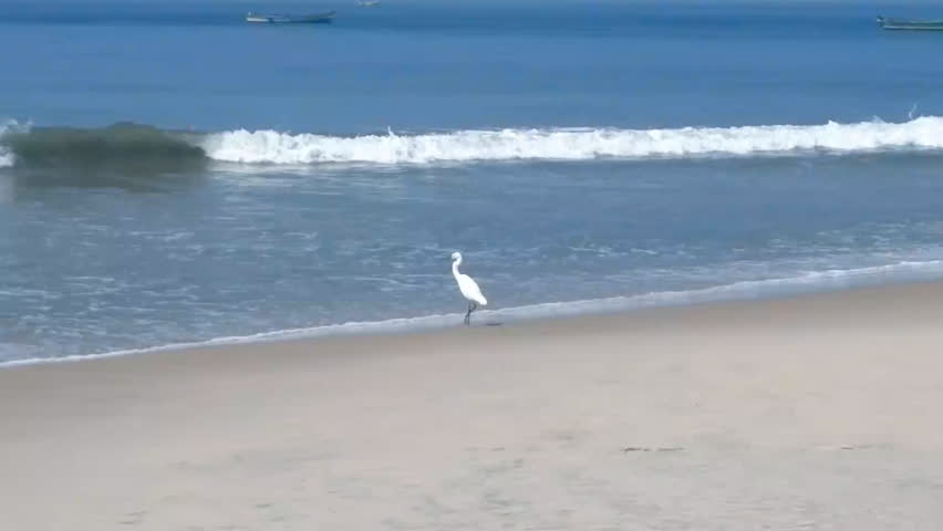 Clean beach, lazy waves, fishing boats, white bird (egret). Advertisement holiday on tropical coast