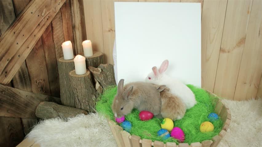 bunny rabbit sniffing around - photo #46
