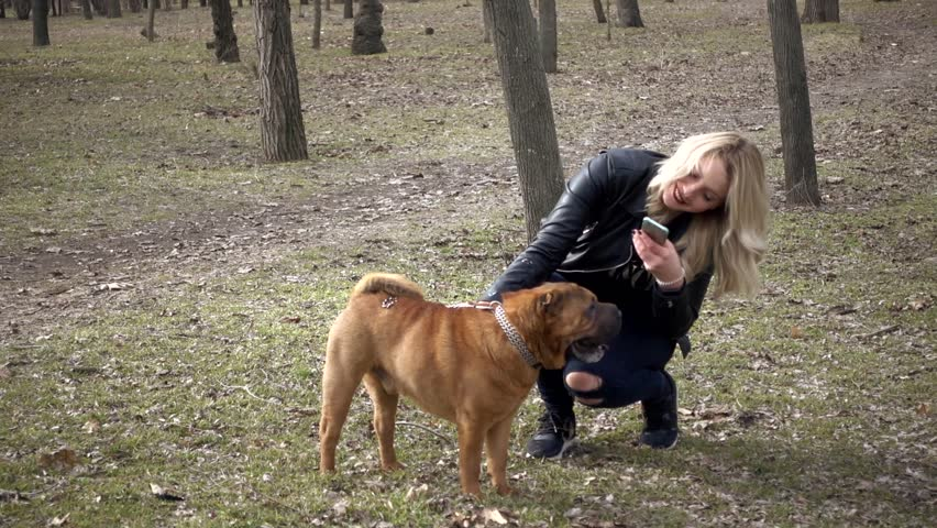 Young Woman Stroking Playing Sharpei Dog In Spring Park