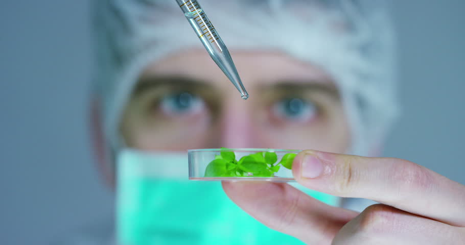 biometric of a scientist with futuristic graphics and holography with which scans and reads the DNA of plant. Concept: immersive technology, augmented reality, science and research and nature